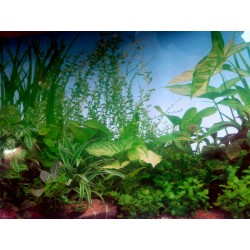 Заден фон за аквариум N3 /...