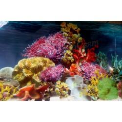 Заден фон за аквариум  N4 /...